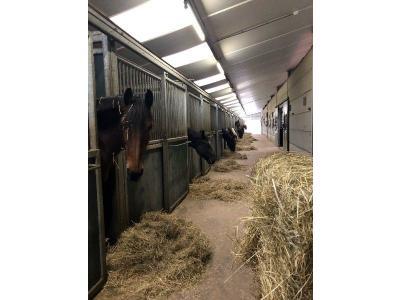 stal met paarden (2) Verkleind.jpg